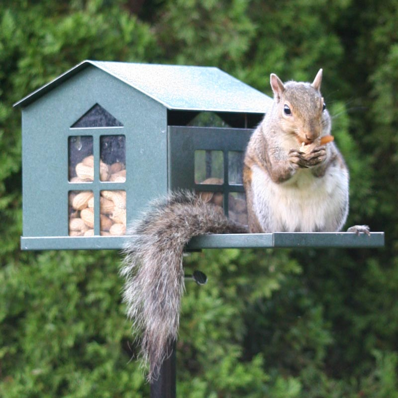 Food Pantry Squirrel Feeder From Spring Hill