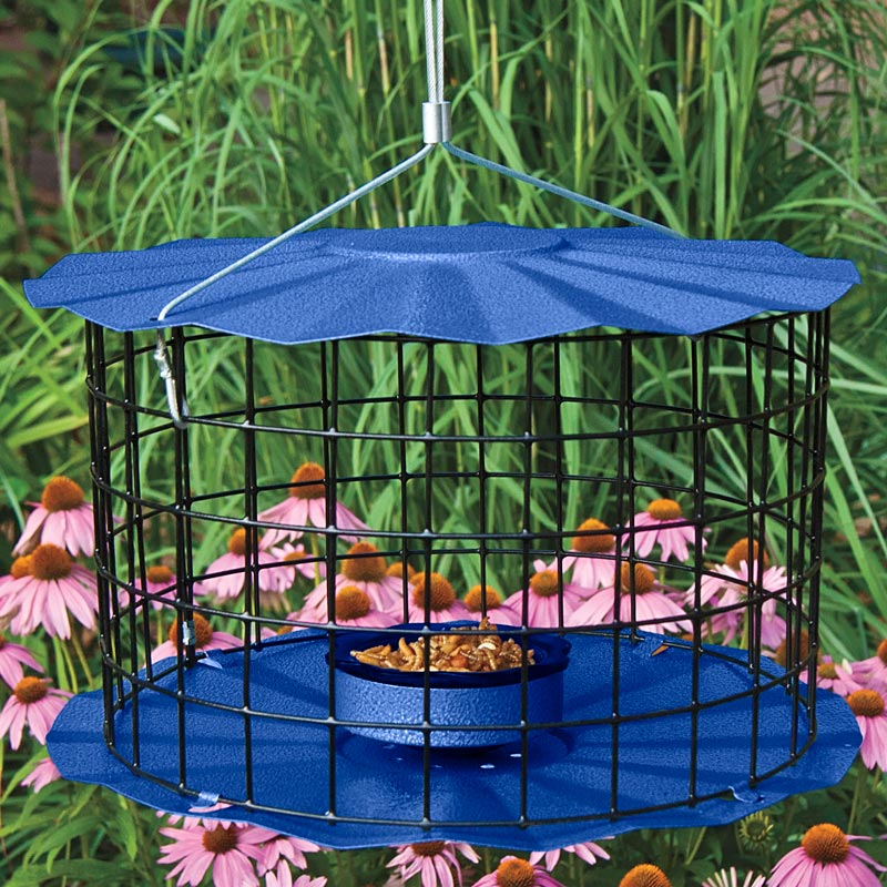 Bluebird Protector Feeder