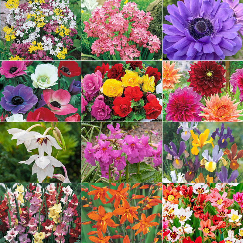 200 200 Bulbs Patio Pots /& Window Boxes by Thompson and Morgan Spring Flowering Bulb Bonanza Collection Hardy Flowering Garden Plants Easy to Grow Spring Flowers Ideal for Planting in Borders
