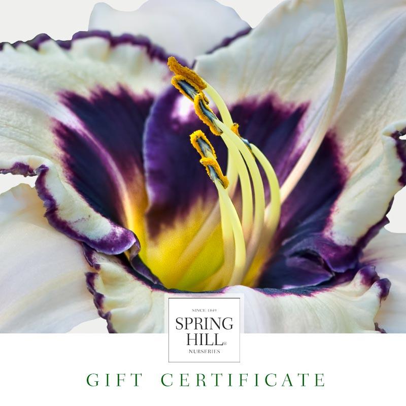 E-Gift Certificate – Daylily Design