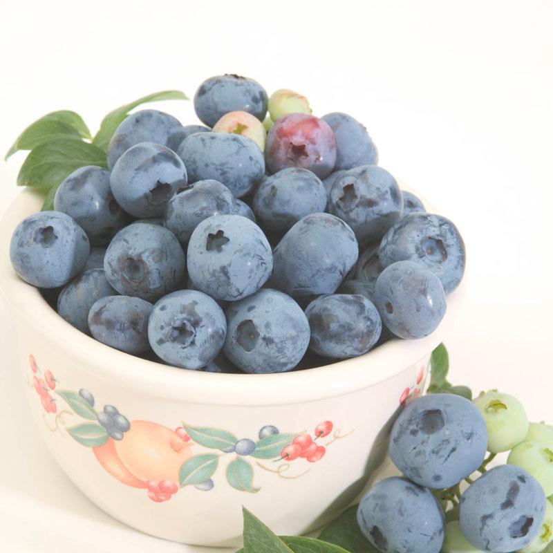 Blueberry Chippewa