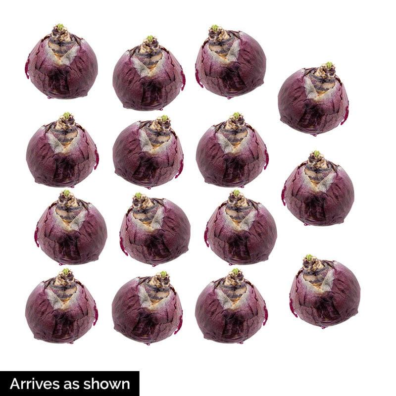 Parfum De Bloom™ Fragrant Hyacinth Collection