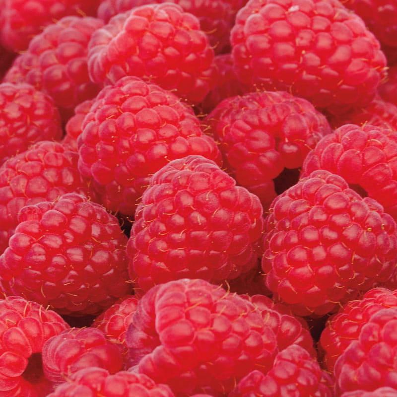 Sweet Repeat™ Red Raspberry