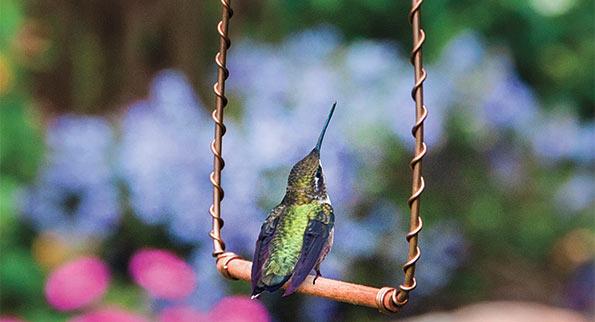 SpringHill Birding