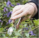 Tips: Pruning