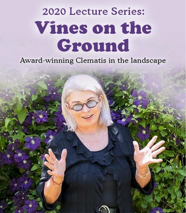 Deborah's Lecture: Vines on Ground