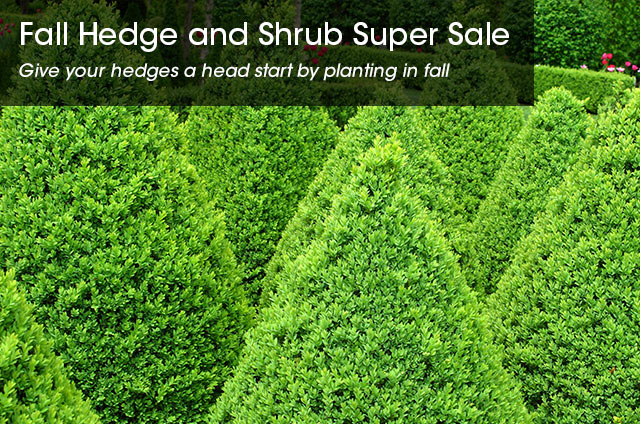 SpringHill Hedge & Shrubs