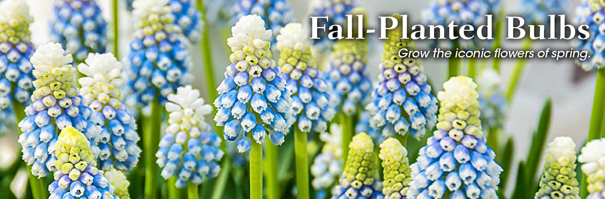 SpringHill Fall Planting Bulbs