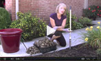 How to Amend Your Garden Soil
