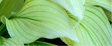 SpringHill Shade Perennials