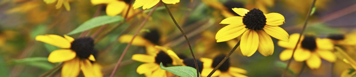 SpringHill Perennials