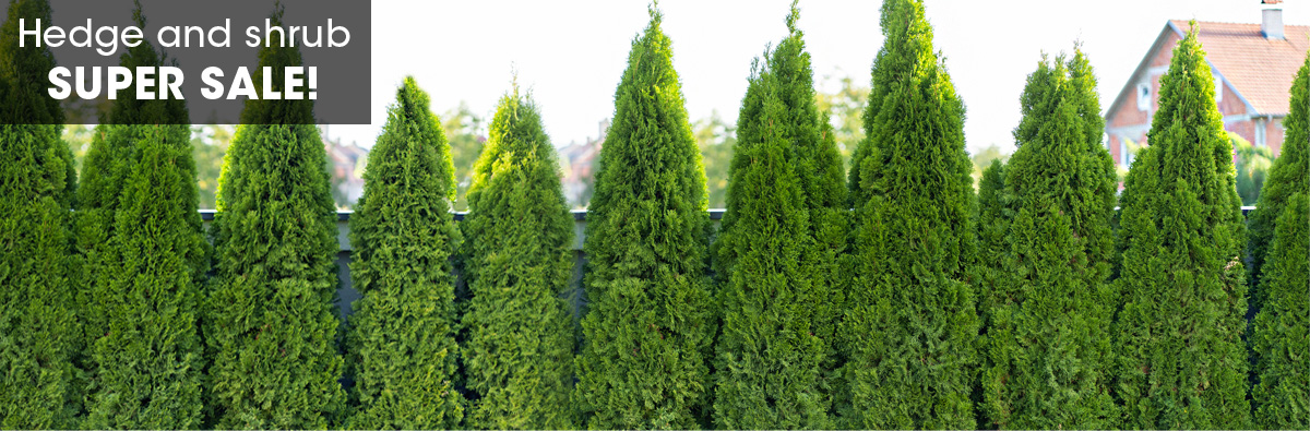 SpringHill Hedge and Shrub Sale