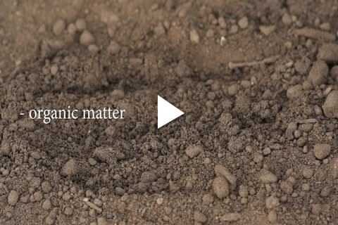 Hydrangea Bareroot - Soil Amending