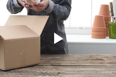 Gladiolus - Unboxing
