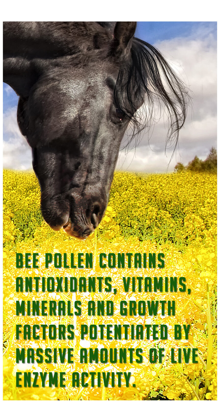 Bee pollen contains antioxidants, vitamins, minerals, and growth factors potentiated by massive amounts of live enzyme activity.