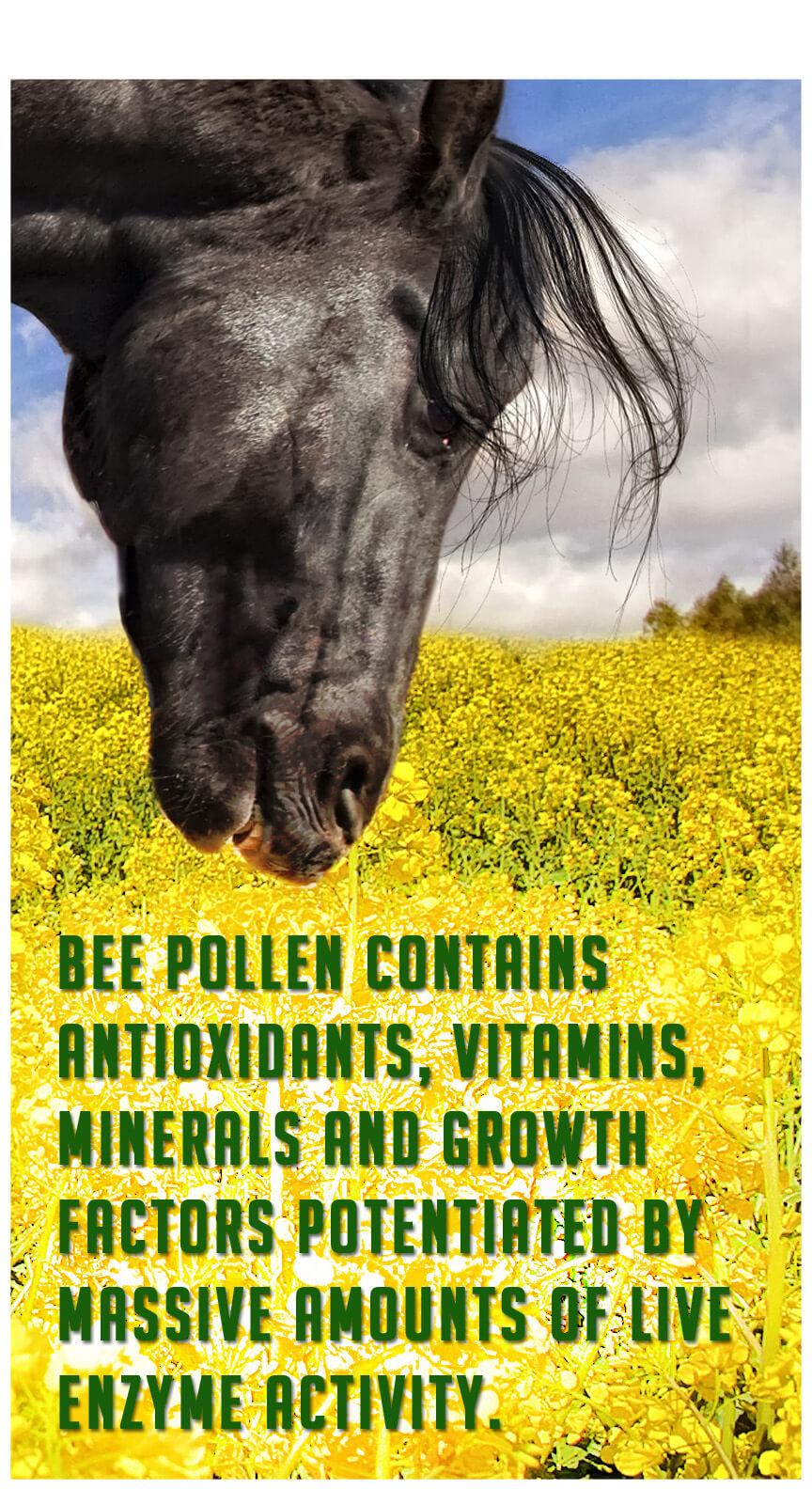 Bee pollen.