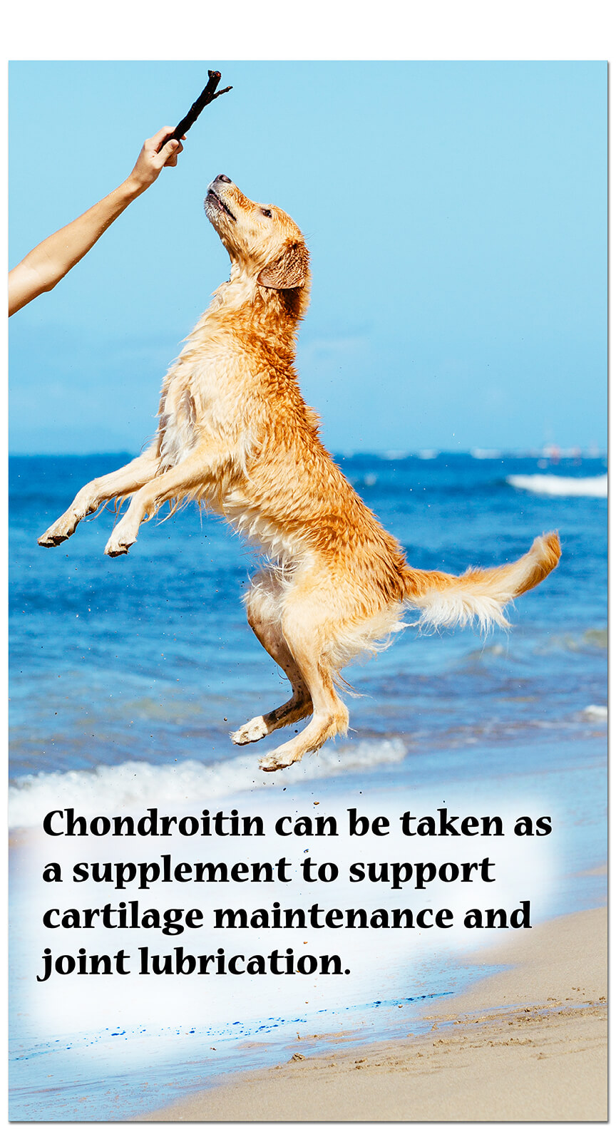 Chondroitin can be taken as a supplement to support healthy joints.