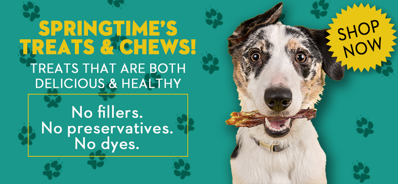 Springtime Supplements's treats and chews. Treats that are both delicious and healthy. No fillers. No preservatives. No dyes.