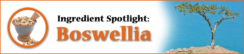 Ingredient Spotlight: Boswellia