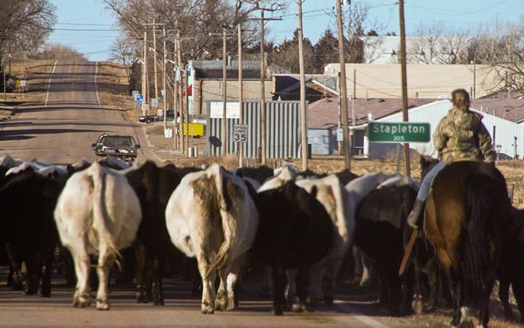 Home Mast Cattledrive