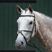 Collegiate Essential Padded Raised Fancy Figure 8 Bridle