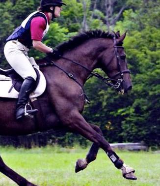 Horse Breastplate