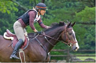 Horse Bridle Micklem