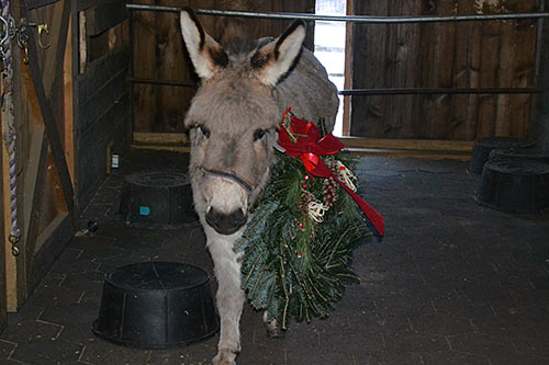 Donkey and wreath