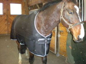 Skybreaker looking thrilled in his Airmesh cooler! But he is dry, after a sweaty workout on a cold day.