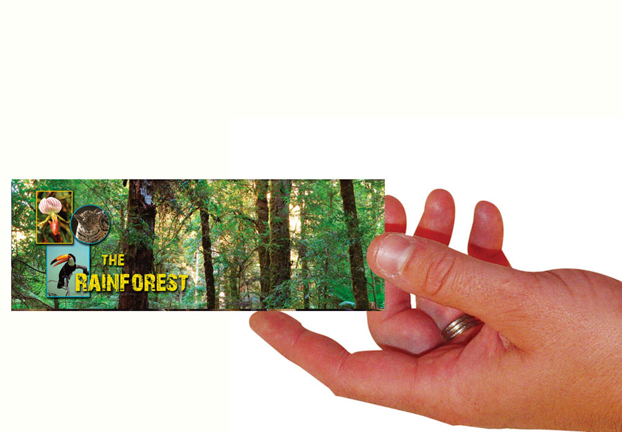 Rainforest Set Of 100 Bookmarks