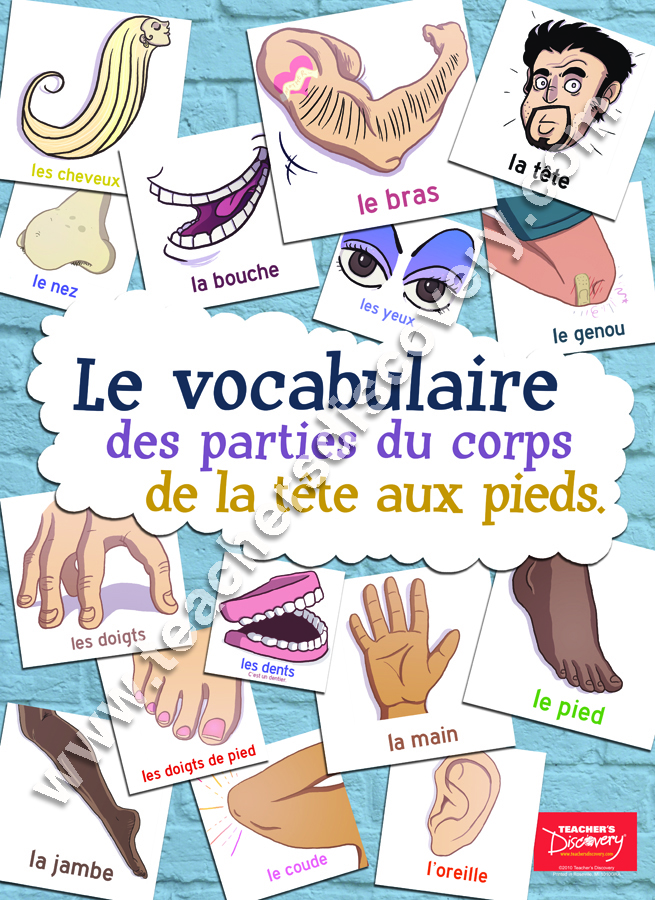 Body Parts Vocabulary French Poster
