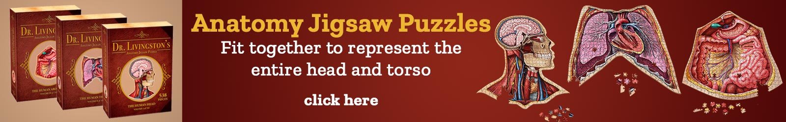 Anatomy Jigsaw Puzzles Fit together to represent the entire head and torso