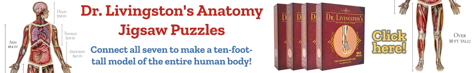 Dr. Livingston's Anatomy Jigsaw Puzzles Connect all seven to make a ten-foot-tall model of the entire human body!