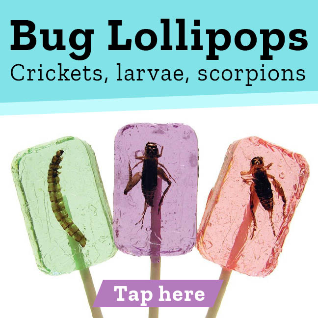 Bug Lollipops Crickets, larvae, scorpions