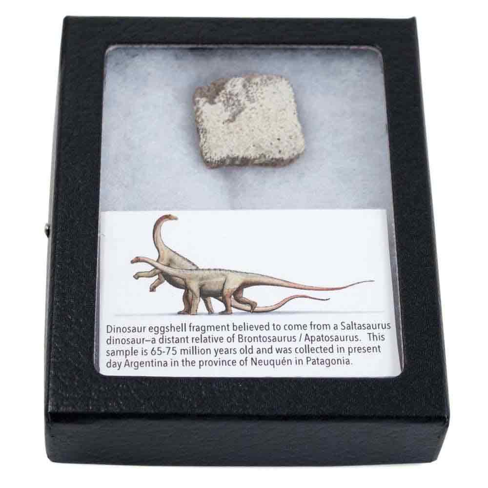 Dinosaur Eggshell Fragment