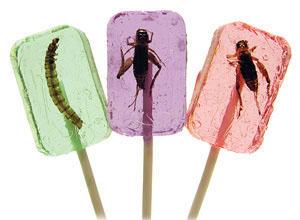 Cricket & Larva Licket Lollipops