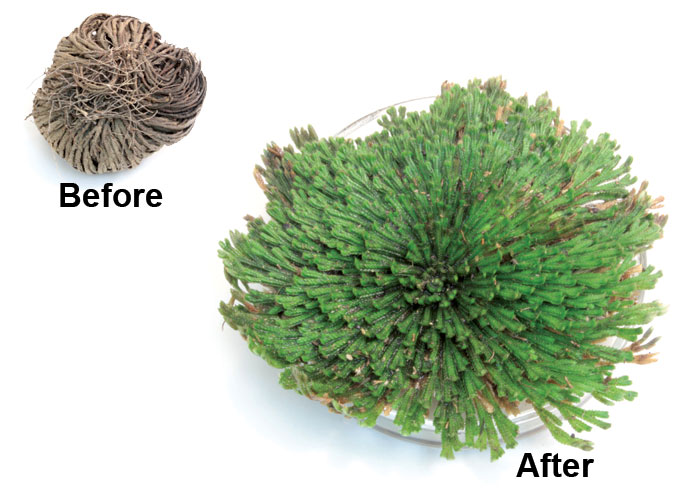 plants that can inspire new adaptive Mimosa biomimicry inspires new adaptive structures by rob aid  climbing plants inspire self-healing membranes  this entry was posted on sunday, feb 20th, .