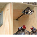 Birdhouse Spy Camera