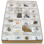 Large Fossil Collection