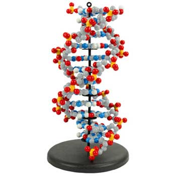 Dynamic DNA - Dynamic DNA 6-Base Pair Set