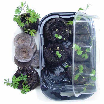 TickleMePlants™ - TickleMe Plant Growing Kit