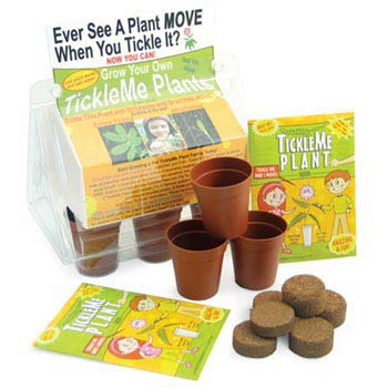 TickleMePlants™ - TickleMe Plant Greenhouse Kit