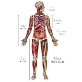 Dr. Livingston's Anatomy Jigsaw Puzzles