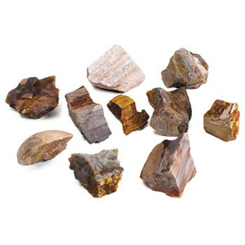 Petrified Wood (10 pieces)