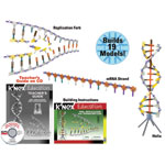 K'Nex DNA Replication & Transcription Set - K'Nex DNA Replication & Transcription Set