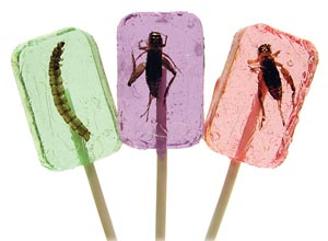 Cricket & Larva Licket Lollipops