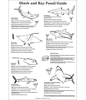 Shark & Ray Fossil Guides