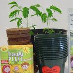 TickleMePlant™ Classroom Kit