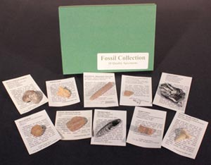 Small Fossil Collection - 10 Pieces