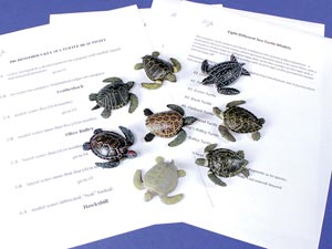 Sea Turtle Dichotomous Key Kit
